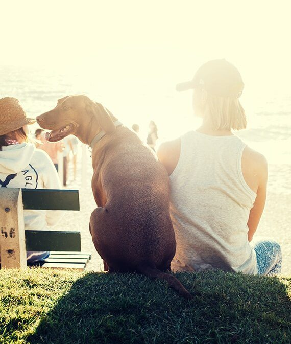 Dog and girl watching sunset at the beach