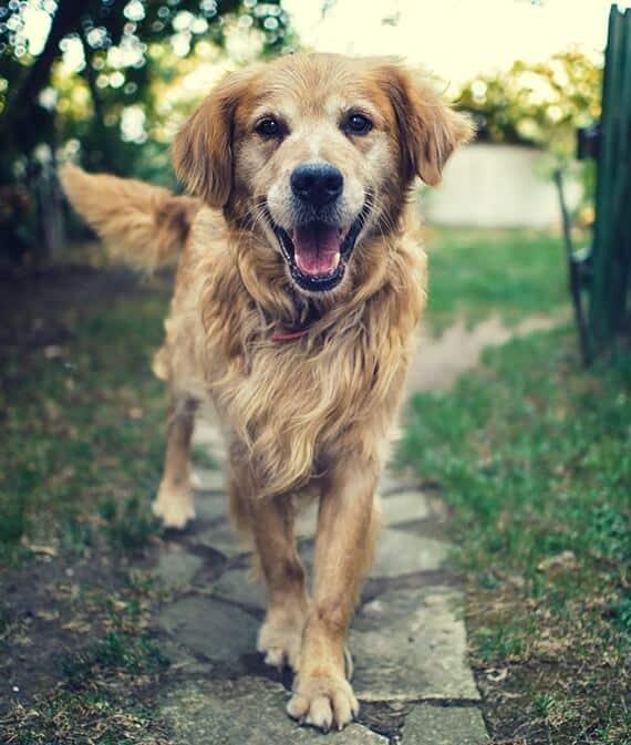 Dog walking on stone pathway
