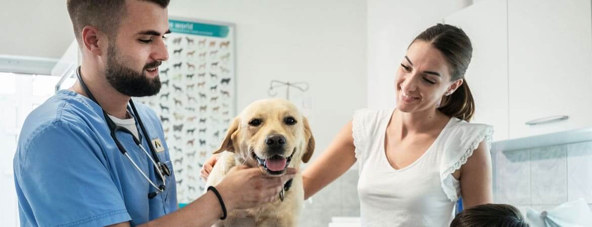 handsome vet helping a pretty woman and her golden lab